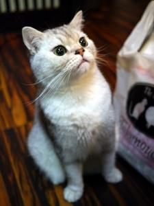 猫カフェ寧估庵1