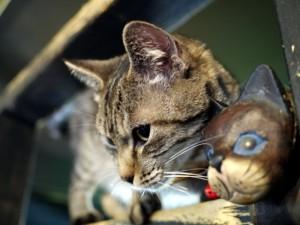 猫カフェ寧估庵2