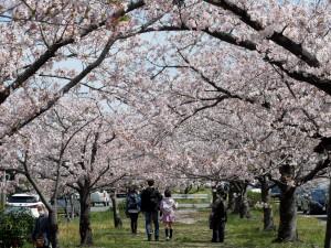 2021年桜3